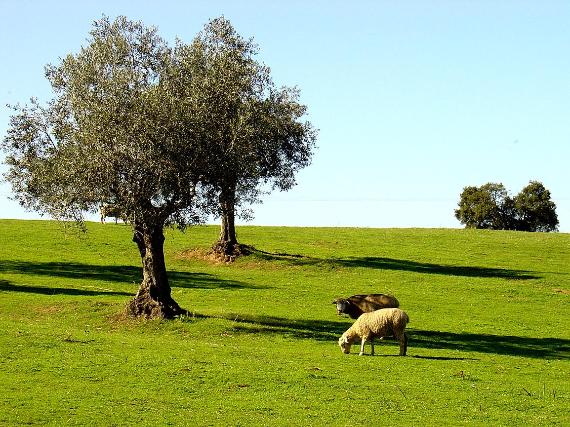 Portugal Bike Tours - Alentejo - Olive trees