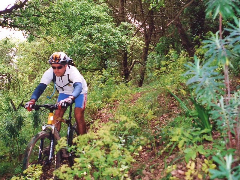 Single Tracks in the Mediterranean Forest Guided - Portugal Bike Tours