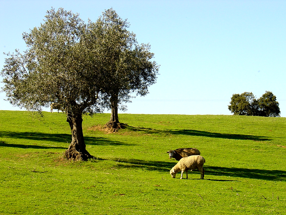 Portugal Bike Tours - Alentejo - Olive trees