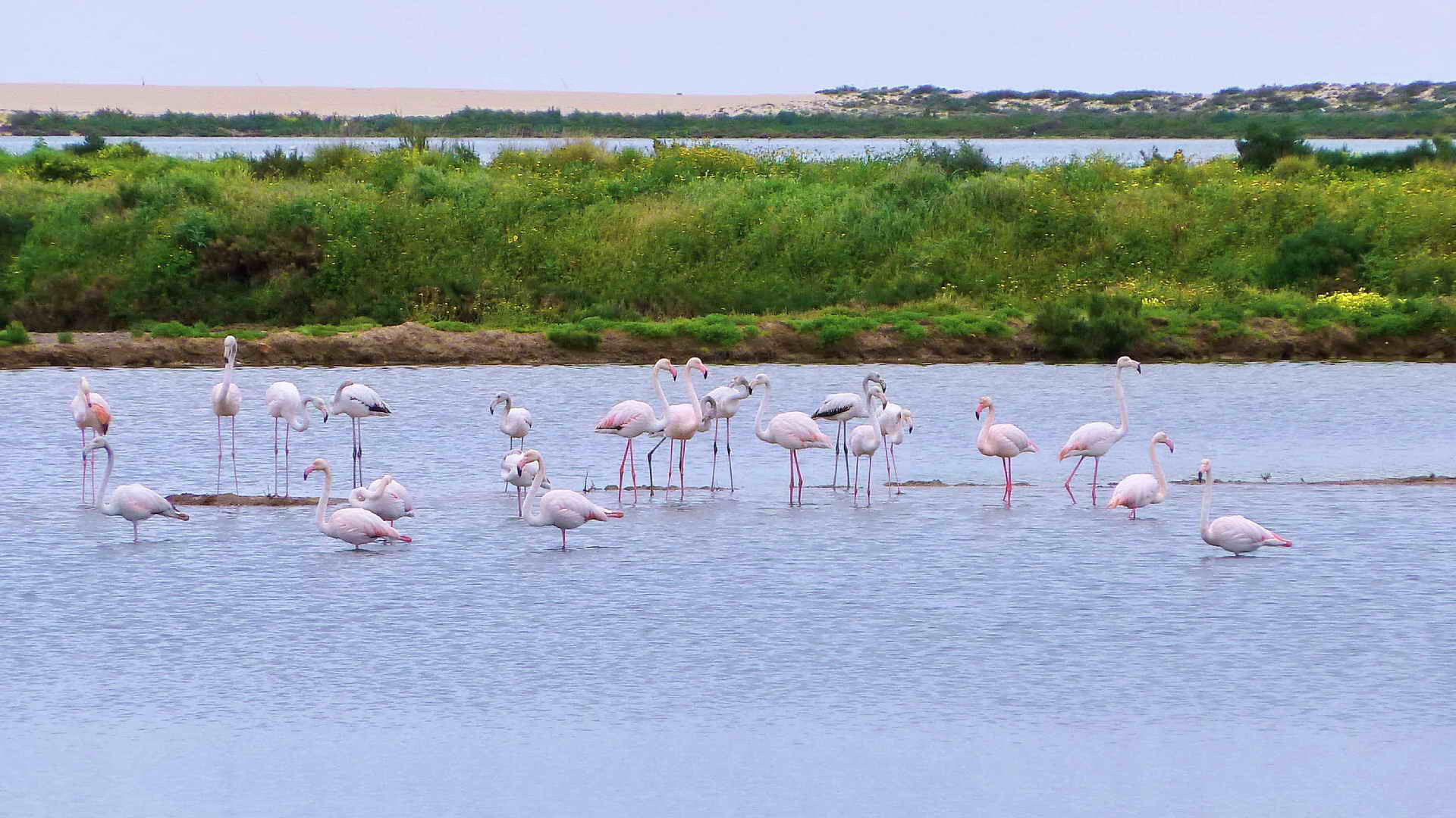 Portugal Bike Tours in Financial Times Ria Formosa Natural Park, Biking in Portugal