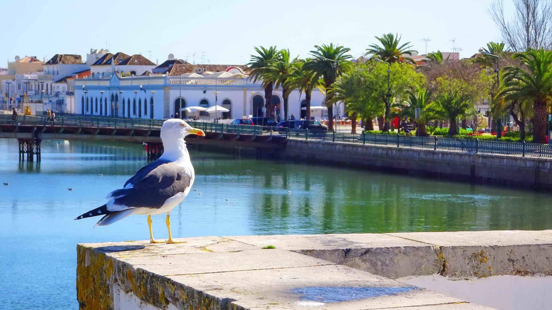 Portugal Bike Tours in Financial Times Town of Tavira, Biking in Portugal