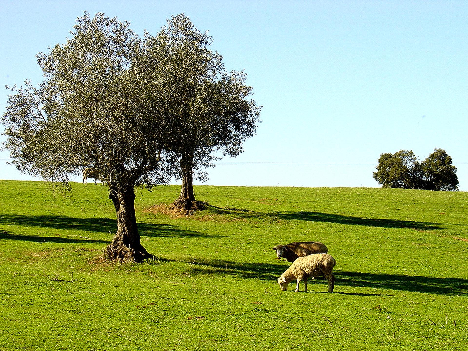 Portugal-Bike-Tours-Alentejo-Olive trees fields