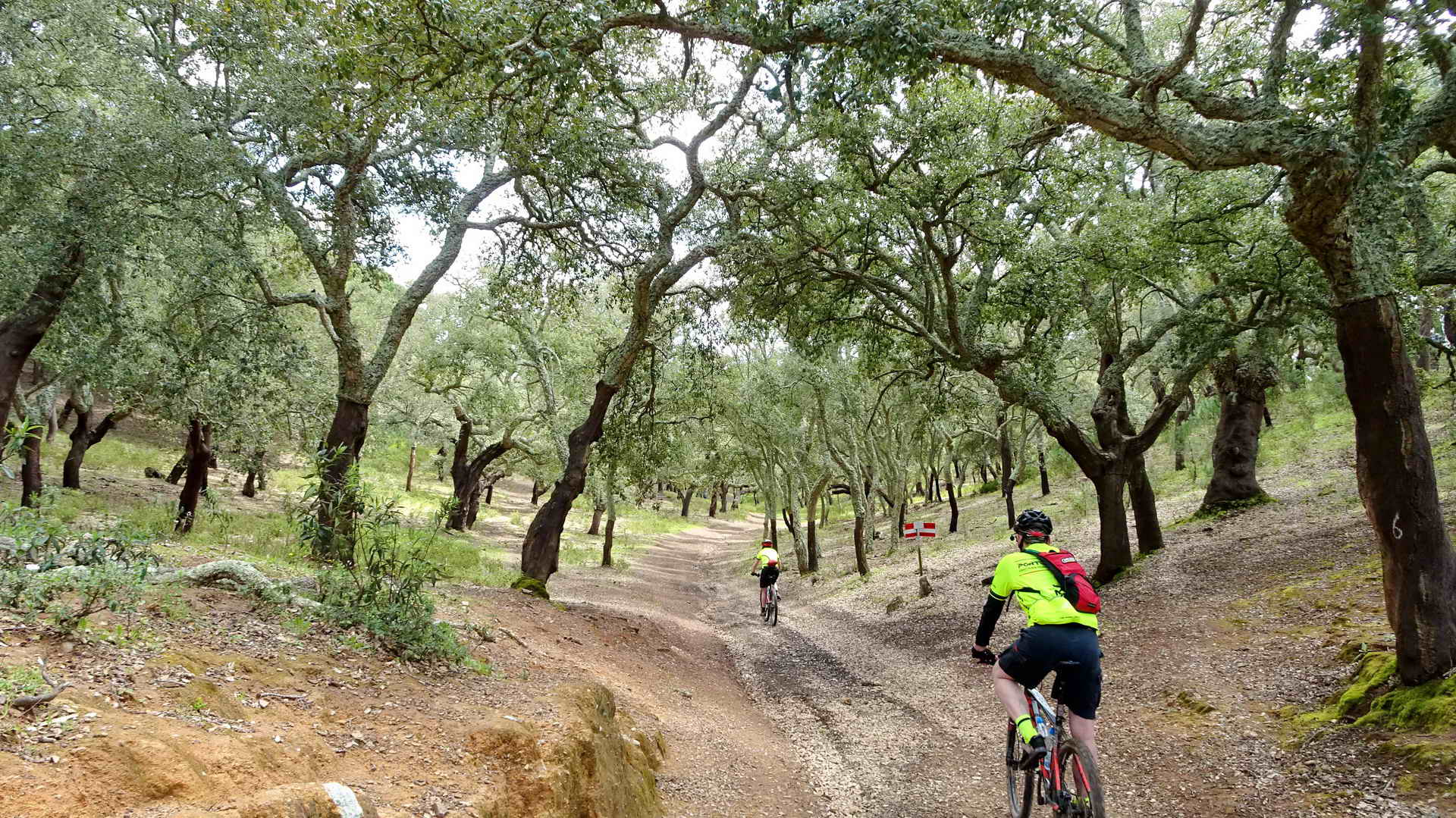 Self Guided Bike Tour in Portugal - Cork Trees and the Algarve Wild Coast